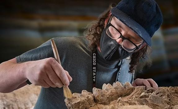 В США обнаружены сохранившийся череп мастодонта и останки «лосося-монстра»
