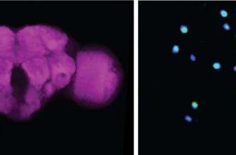 Учёные считают, что дрозофилы и комары «умнее», чем думает большинство людей