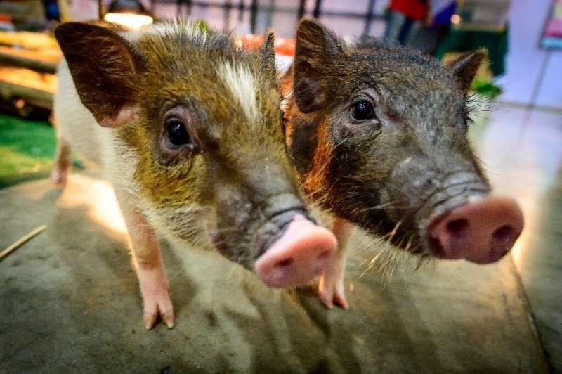 Phys.org: Млекопитающие могут дышать через задний проход в экстренных случаях