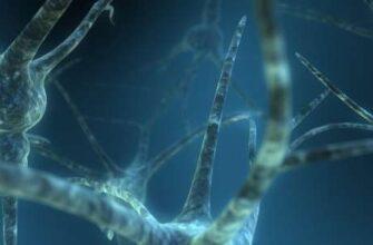 Сочетание МРТ структур мозга с генетическими данными позволяет по-новому взглянуть на белое вещество