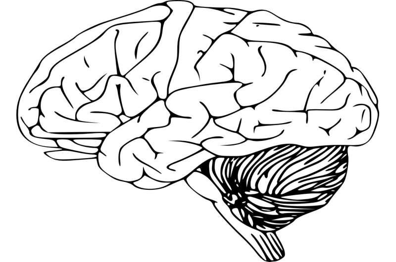 Новое исследование показало, что «эффект Моцарта» снижает эпилептическую мозговую активность