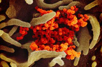 Выжившие после SARS-CoV-2 говорят, что после излечения они испытывают странный вкус и запах
