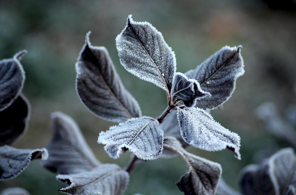 В Омске опять ожидаются заморозки до -5 °С