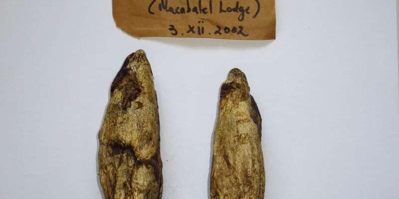 Споры грибов из коллекций 250-летней давности получили новую жизнь