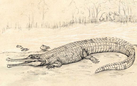 В Австралии обнаружены новые древние виды крокодилов