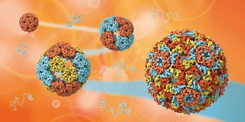Учёные раскрывают тайны эволюции вирусов