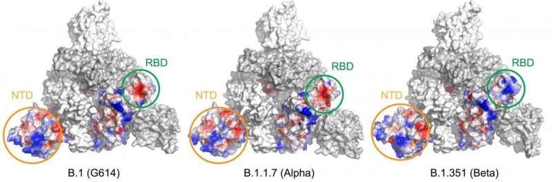 Выявлены структурные изменения в альфа- и бета-вариантах SARS-CoV-2