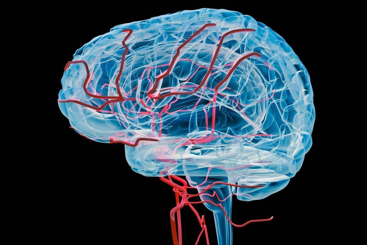 Исследование показало роль кальция в управлении кровотоком в головном мозге