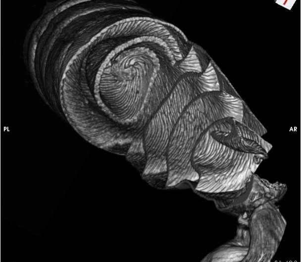 3D-изображения кишечника акулы показывают, что он функционирует как клапан Николы Теслы