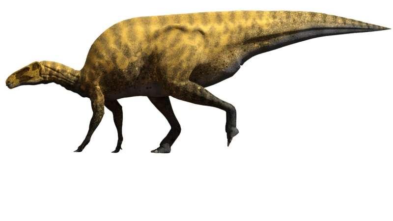 Недавно открытый вид динозавров с острыми когтями был размером со школьный автобус