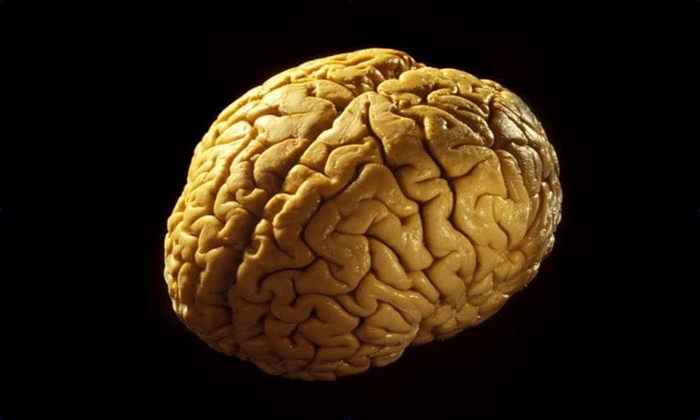 Учёные обнаружили часть мозга, ответственную за религиозность человека
