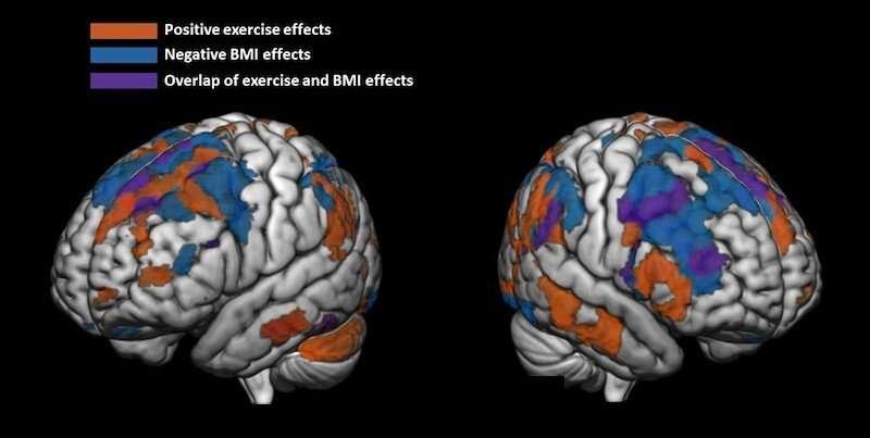 Регулярная физическая активность способствует более «здоровому» мозгу подростков