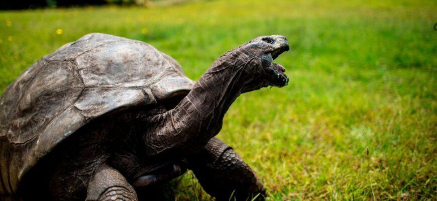 Учёные рассказали, почему черепахи живут так долго