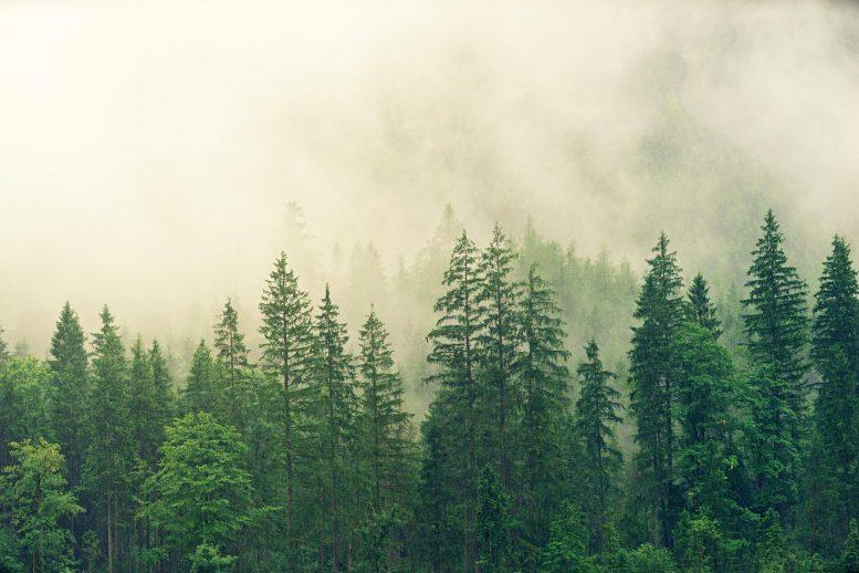 Спутники показывают, как леса увеличивают облачность и охлаждают климат