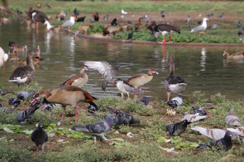 Люди стали причиной исчезновения многих видов птиц за последние 50 000 лет