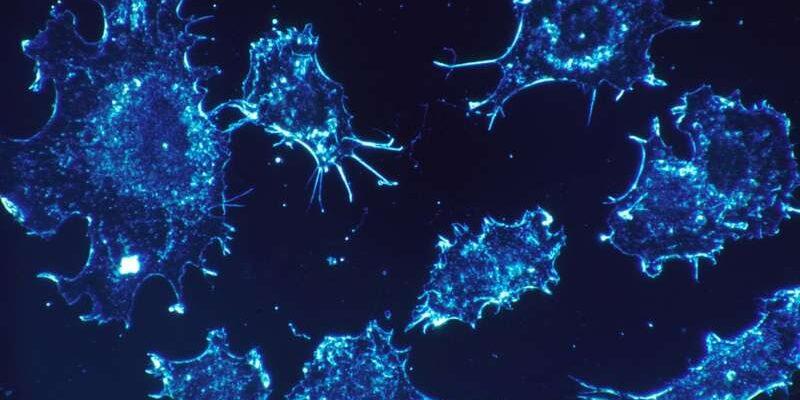 Новое лечение рака может пробудить иммунную систему