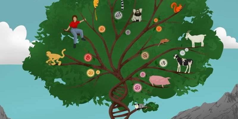 Так называемая мусорная ДНК играет решающую роль в развитии млекопитающих
